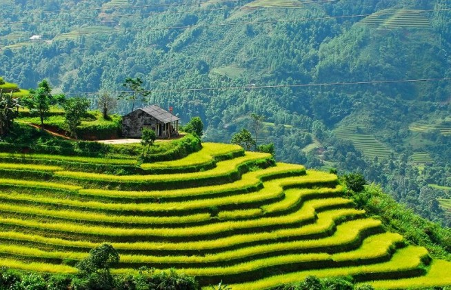 sapa-vietnam-rice-terraces-field.jpg